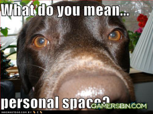 45289_24222d1299342856-super-saturday-20th-chat-thread-funny-dog-pictures-personal-space